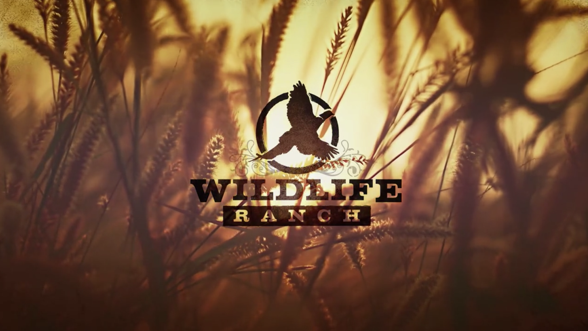 wildliferanch-vid-thumb